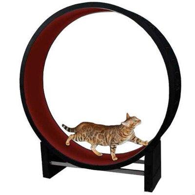 Loopwiel Cat in Motion