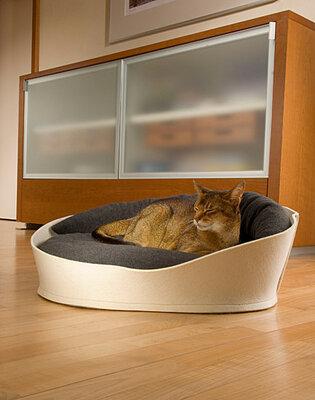 Vilten kattenmand Arena
